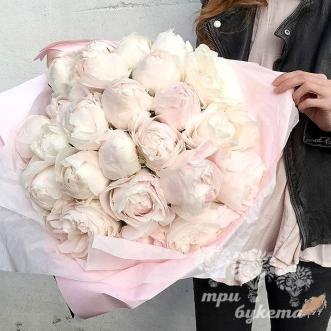 23-belyh-piona-dyushes-v-krafte